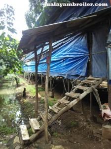 Jual Ayam Broiler di Jakarta Selatan