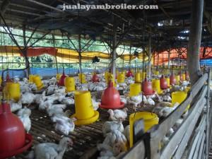 Jual Ayam Broiler Jakarta Utara