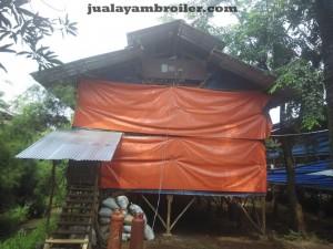 Jual Ayam Broiler di Jakarta Utara