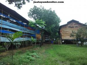 Jual Ayam Broiler di Duren Jaya