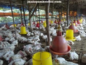 Jual Ayam Broiler di Pekayon Jaya