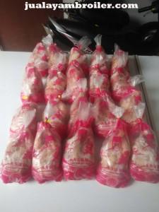 Jual Ayam Broiler di Pulo Gadung Jakarta Timur