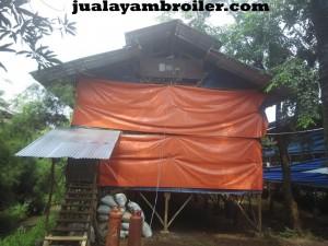 Jual Ayam Broiler Utan Kayu Jakarta Timur