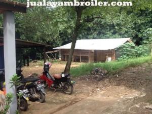 Jual Ayam Broiler di Ciputat Tangerang Selatan