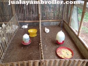 Jual Ayam Broielr di Tajur Halang Bogor