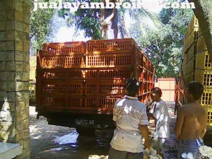 Jual Ayam Broiler Sentul Barat Bogor