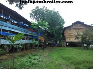 Jual Ayam Broiler di Sukamakmur Bogor