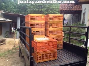 Jual Ayam Broiler Gunung Putri Bogor