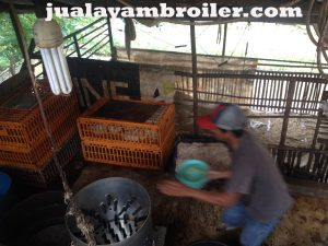 Jual Ayam Broiler di Kalibata Jakarta Selatan