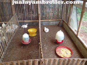 Jual Ayam Broiler di Jakasetia Bekasi
