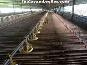Jual Ayam Karkas Pasar Rebo Jakarta Timur