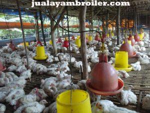 Jual Ayam Karkas UKI Jakarta Timur