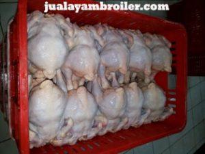 Jual Ayam Karkas di KSU Depok