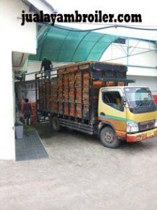 Jual Ayam Karkas di Margonda Depok