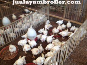 Jual Ayam Karkas Pisangan Jakarta Timur