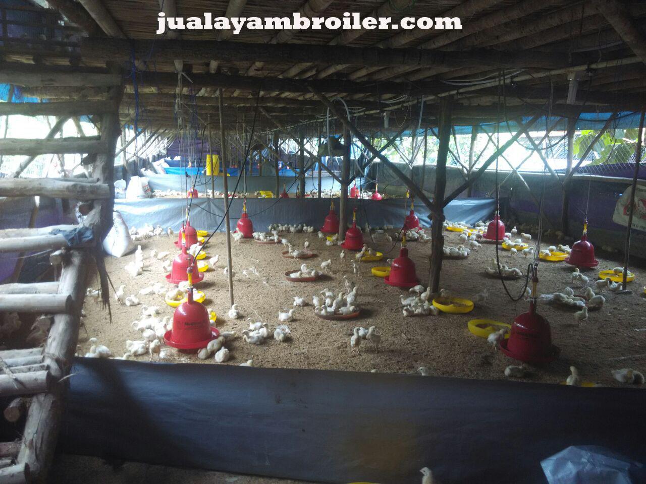 Jual Ayam Broiler Jakarta Barat