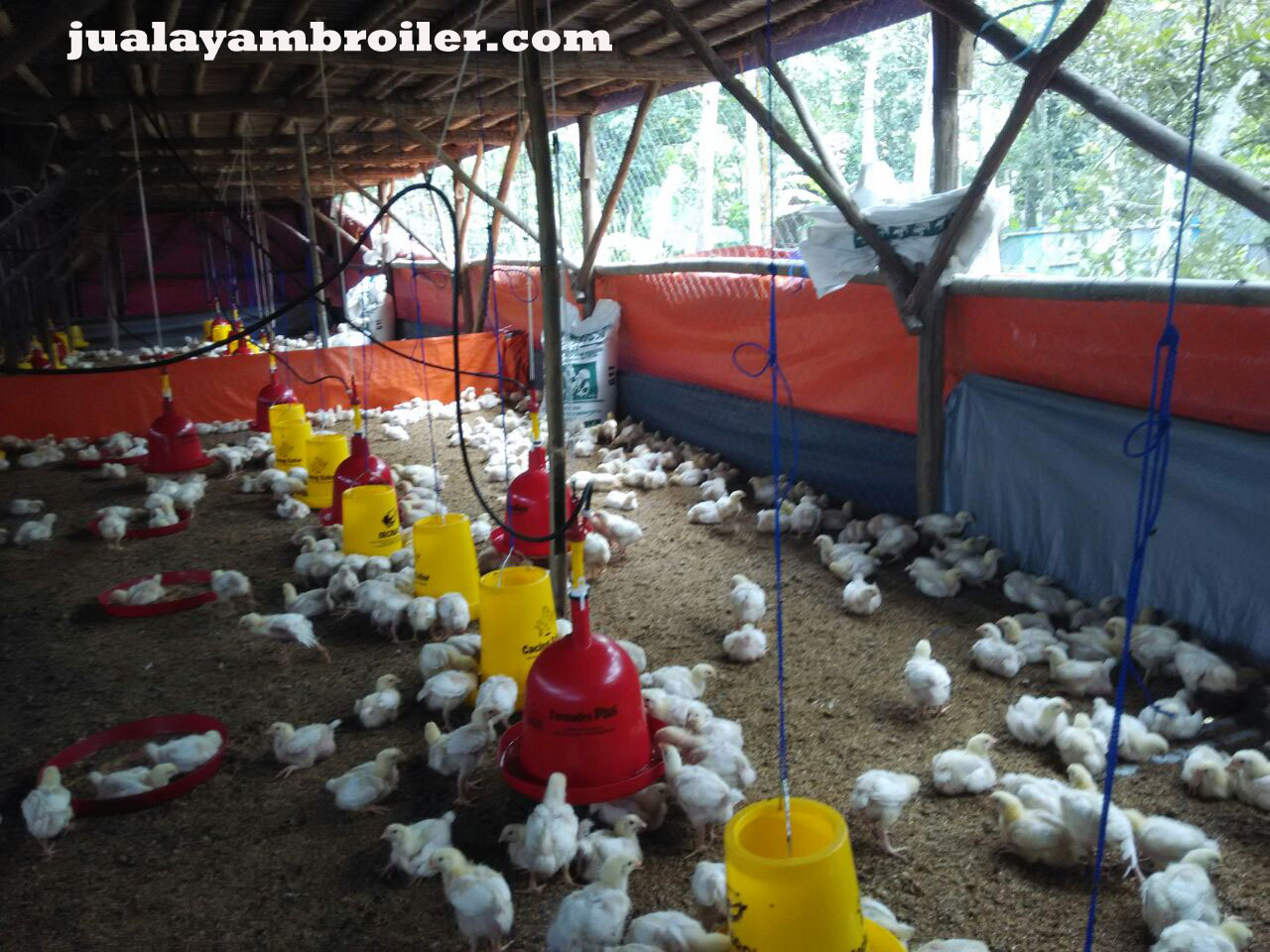 Jual Ayam Broiler Jakarta Selatan
