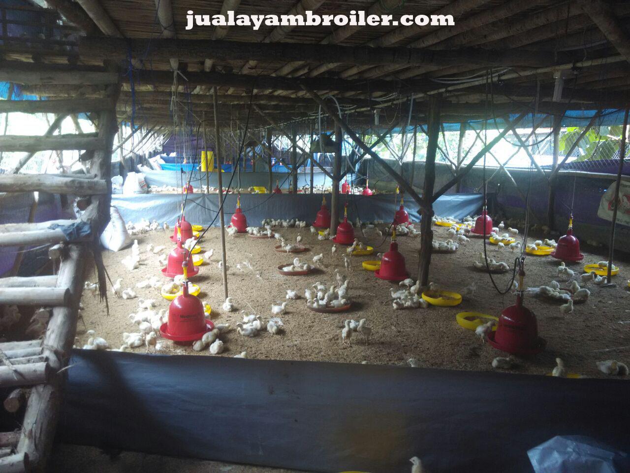 Jual Ayam Broiler di Tangerang
