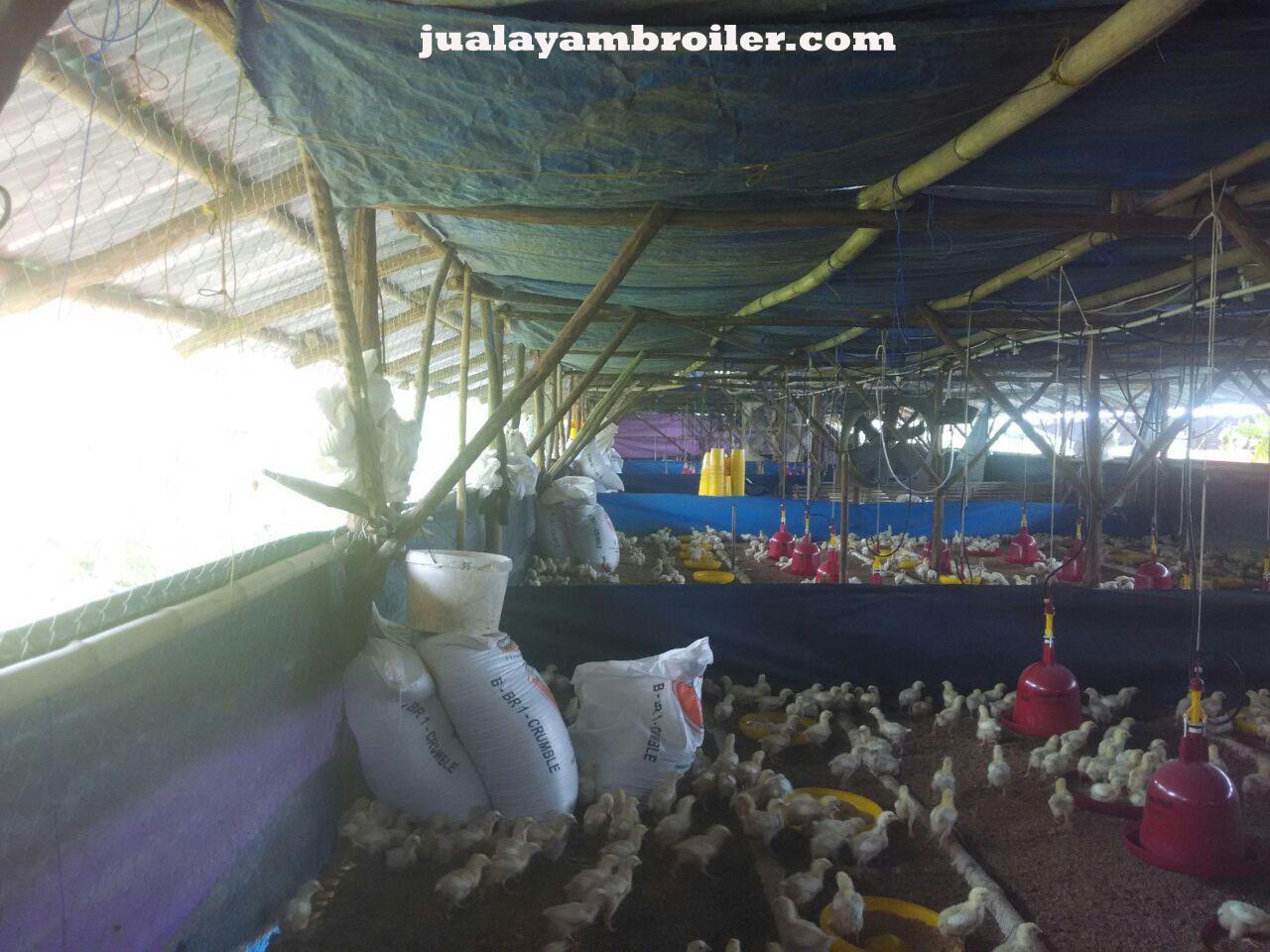 Jual Ayam Broiler di Kemang Bekasi