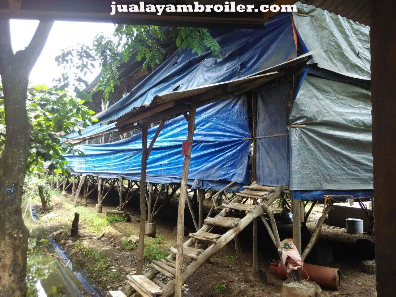 Jual Ayam Broiler Makasar Jakarta Timur