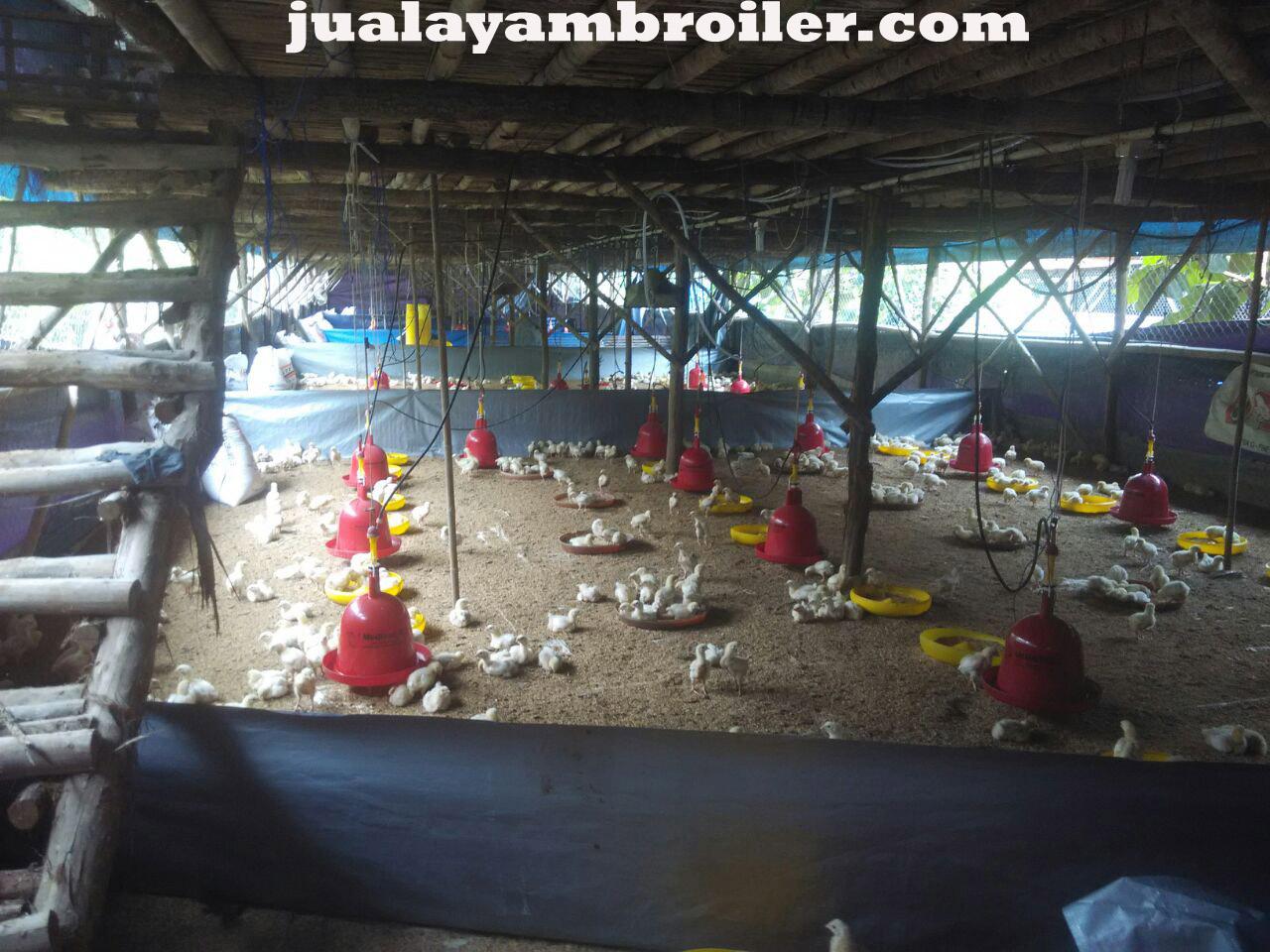 Jual Ayam Broiler di Pinang Ranti Jakarta Timur