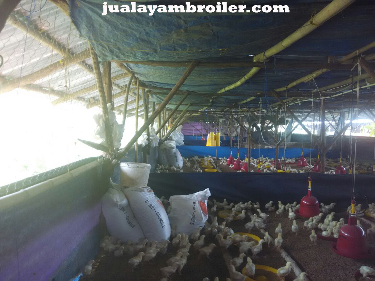 Jual Ayam Broiler Kebon Manggis Jakarta Timur