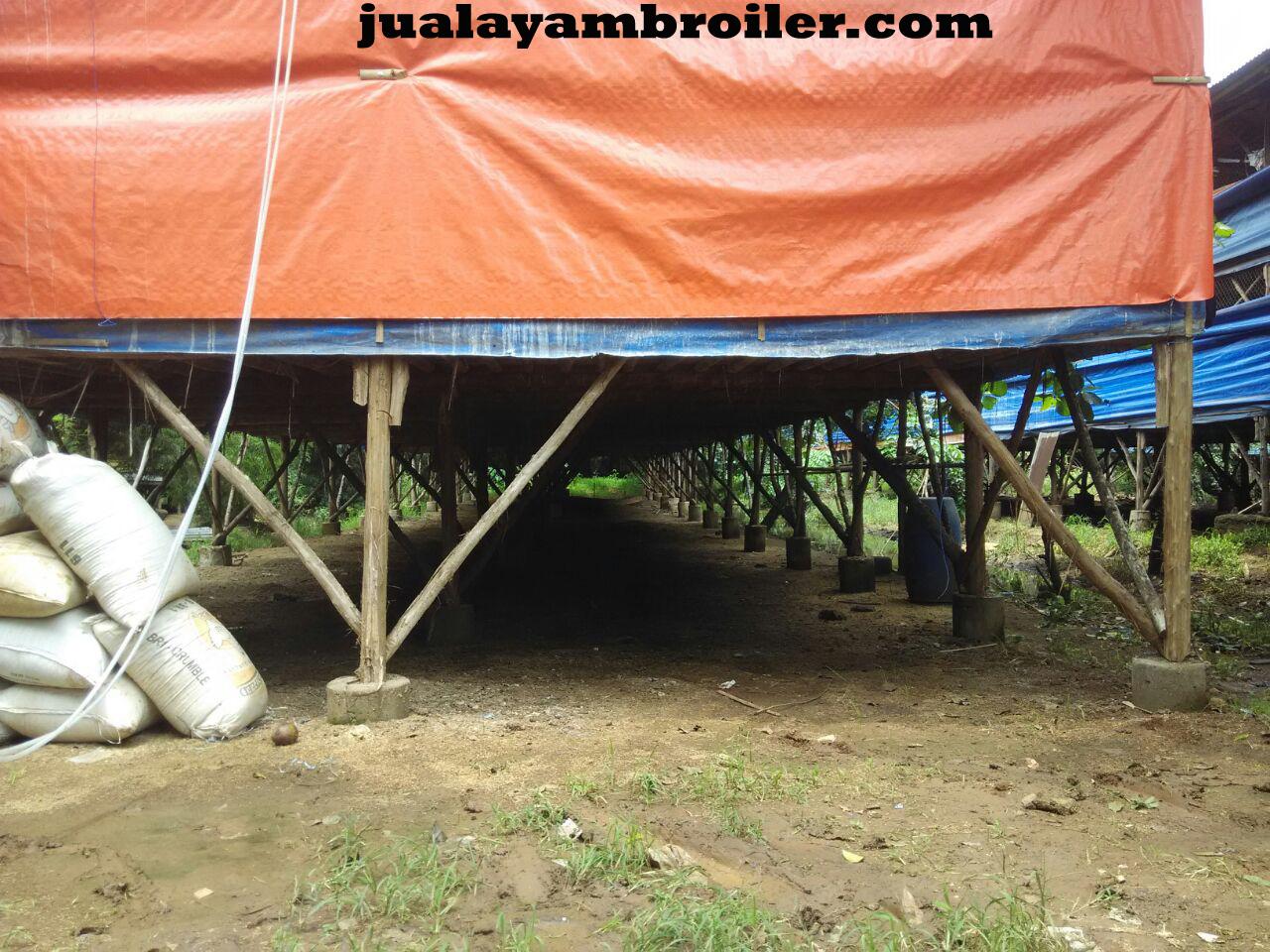 Jual Ayam Broiler di Kebon Manggis Jakarta Timur