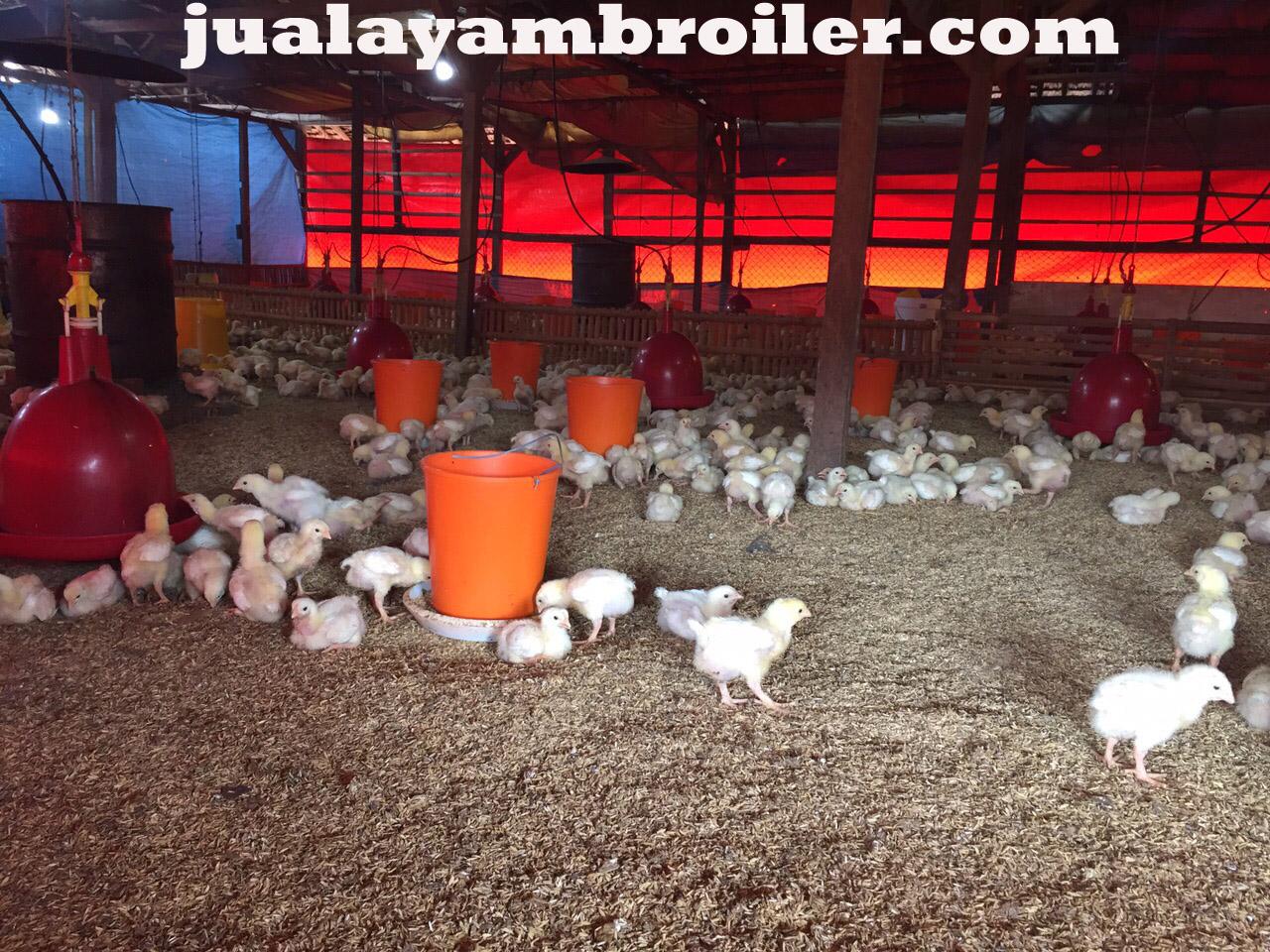 Jual Ayam Broiler Harapan Baru Bekasi