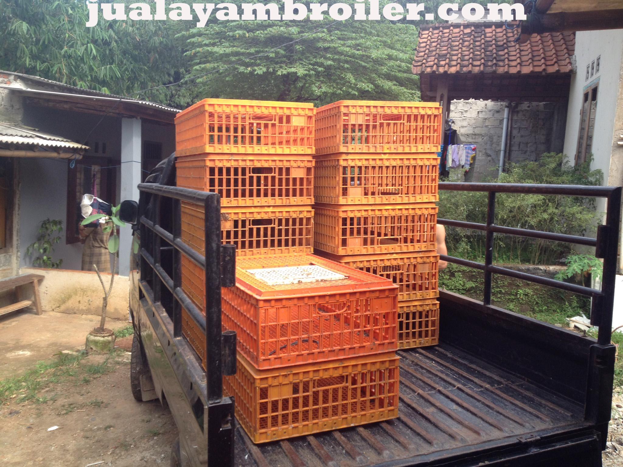 Jual Ayam Broiler Pondok Cabe Tangerang Selatan