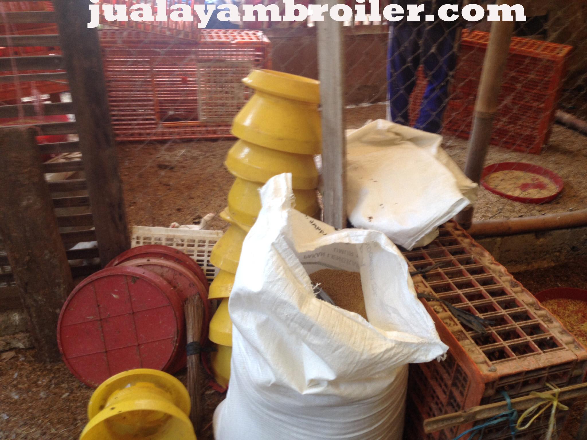 Jual Ayam Broiler di Tajur Bogor