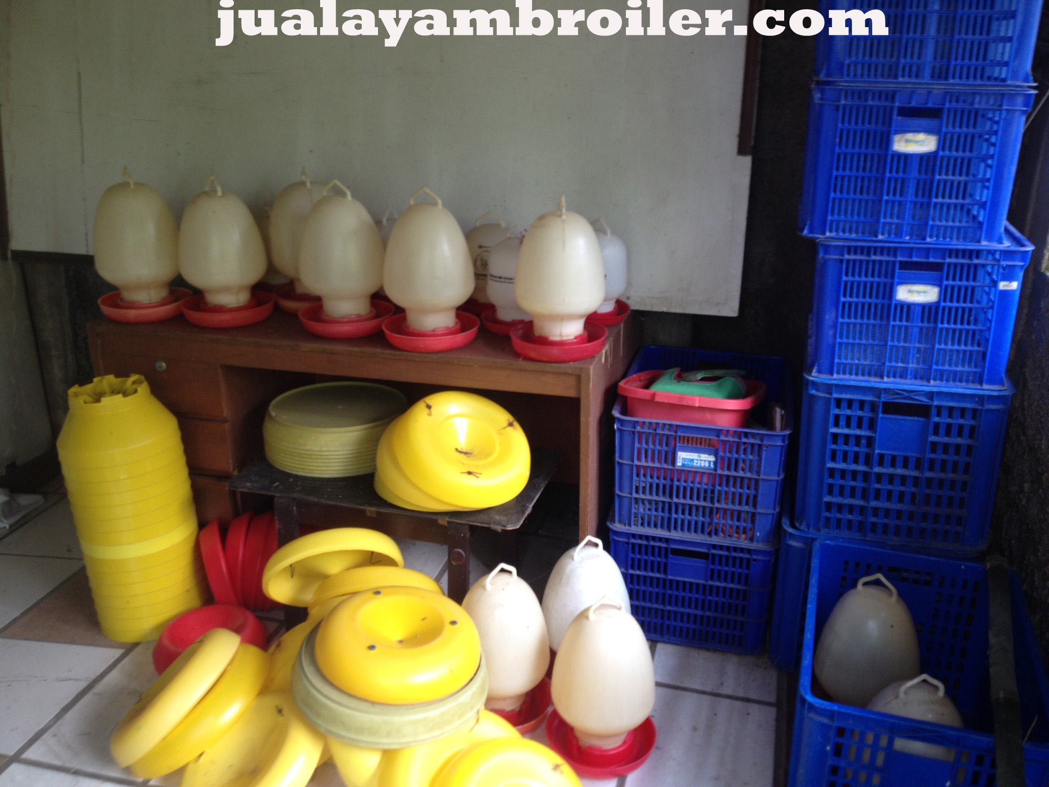 Jual Ayam Broiler Sentul Selatan Bogor