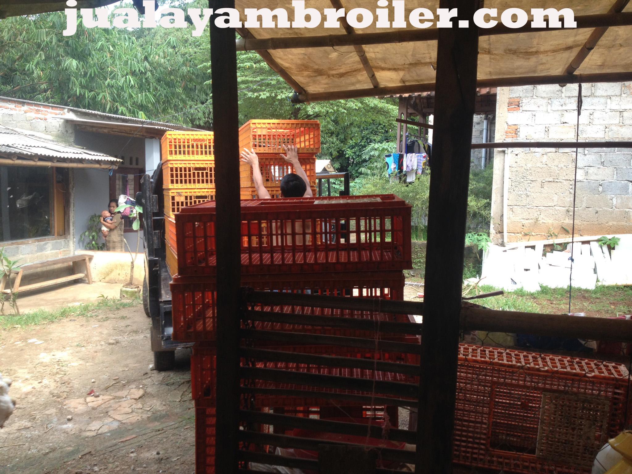 Jual Ayam Broiler Tajur Halang Bogor