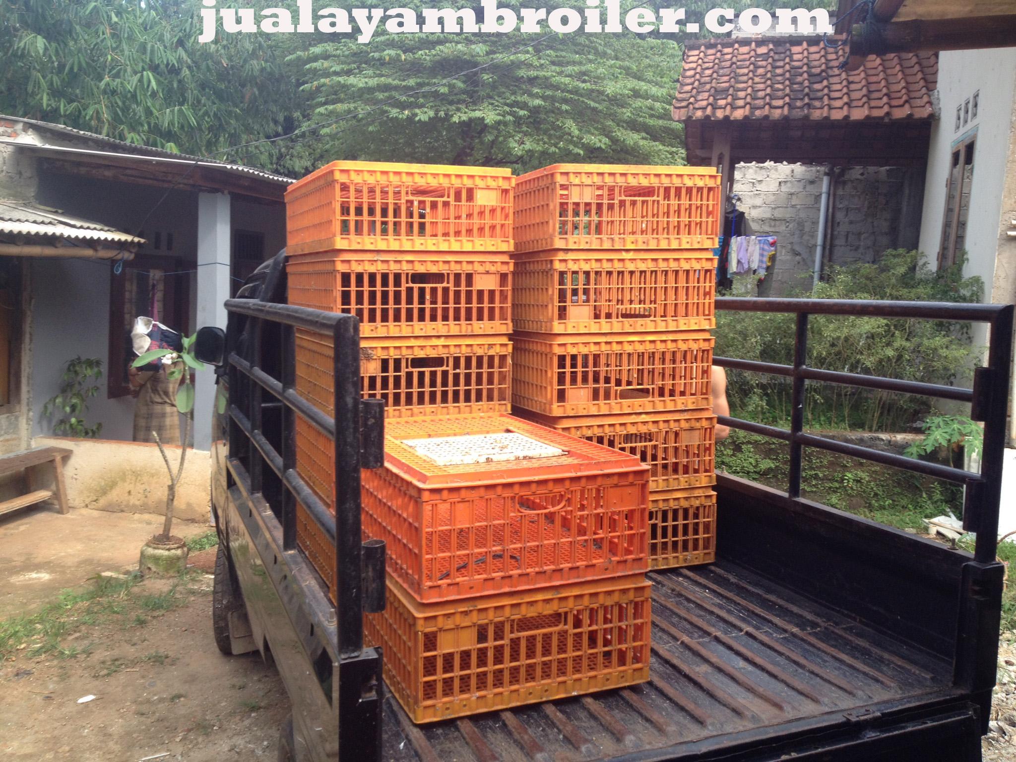 Jual Ayam Broiler di Dramaga Bogor