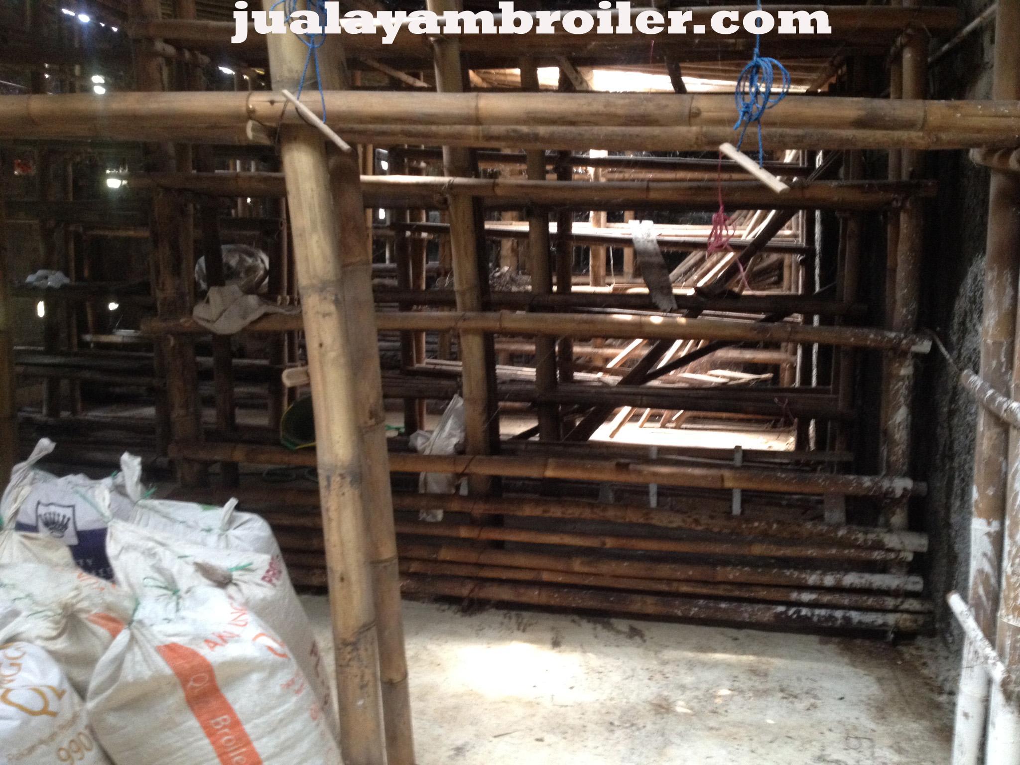 Jual Ayam Broiler di Cariu Bogor