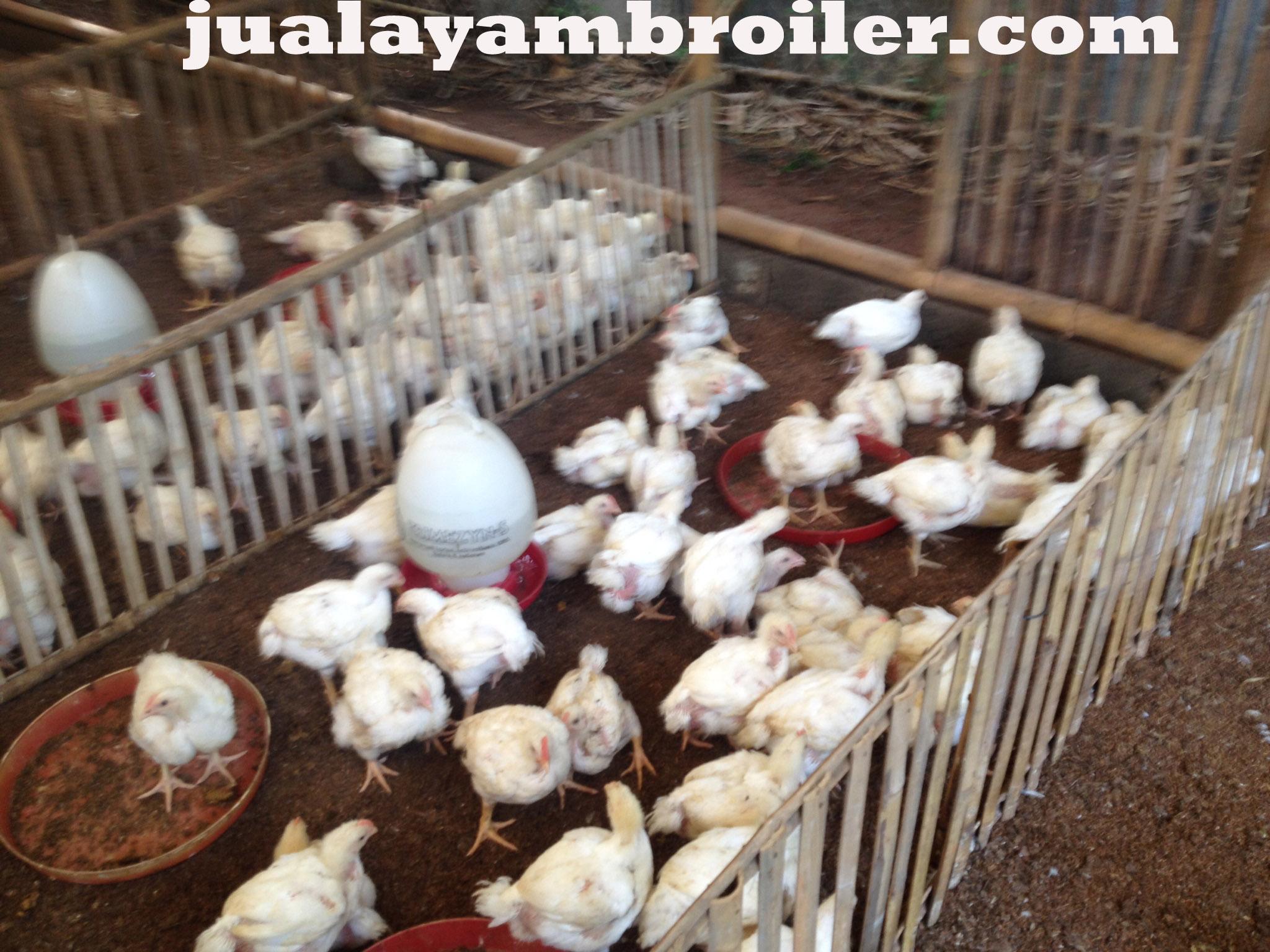 Jual Ayam Broiler Kalibata Jakarta Selatan