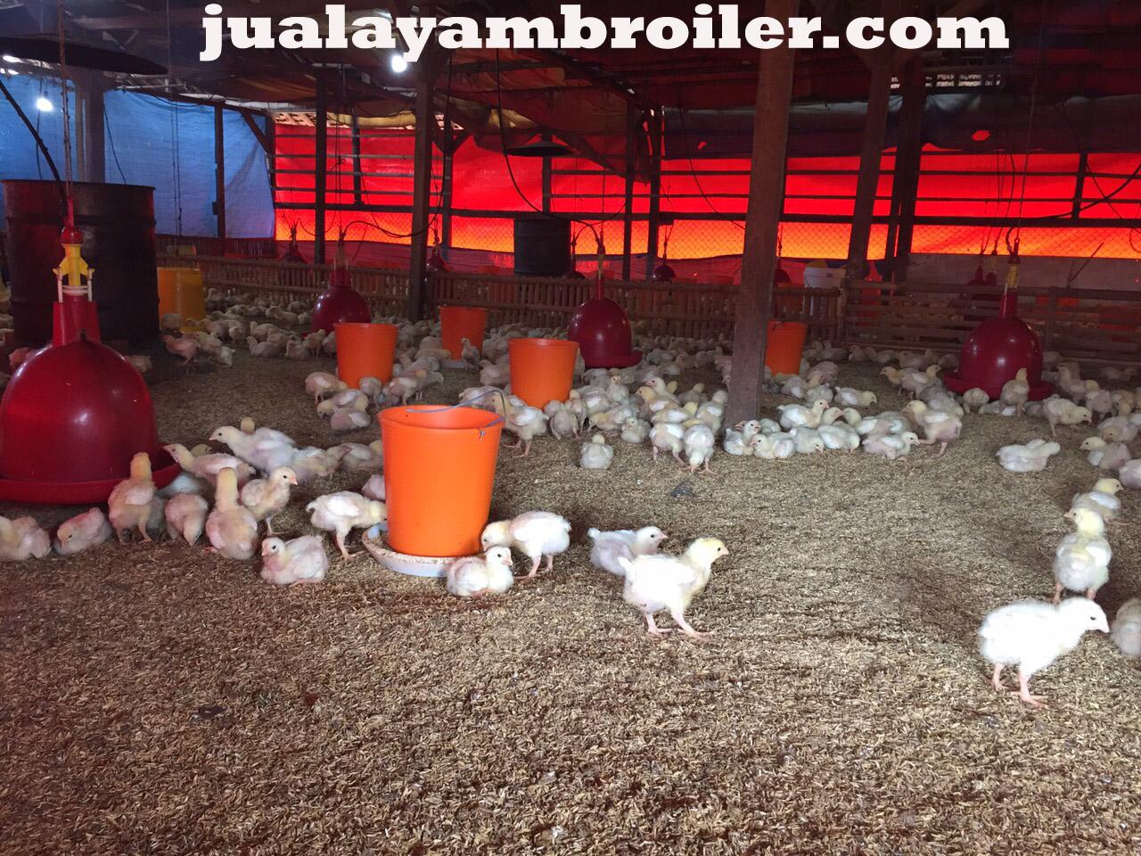 Jual Ayam Broiler Jatikramat Bekasi