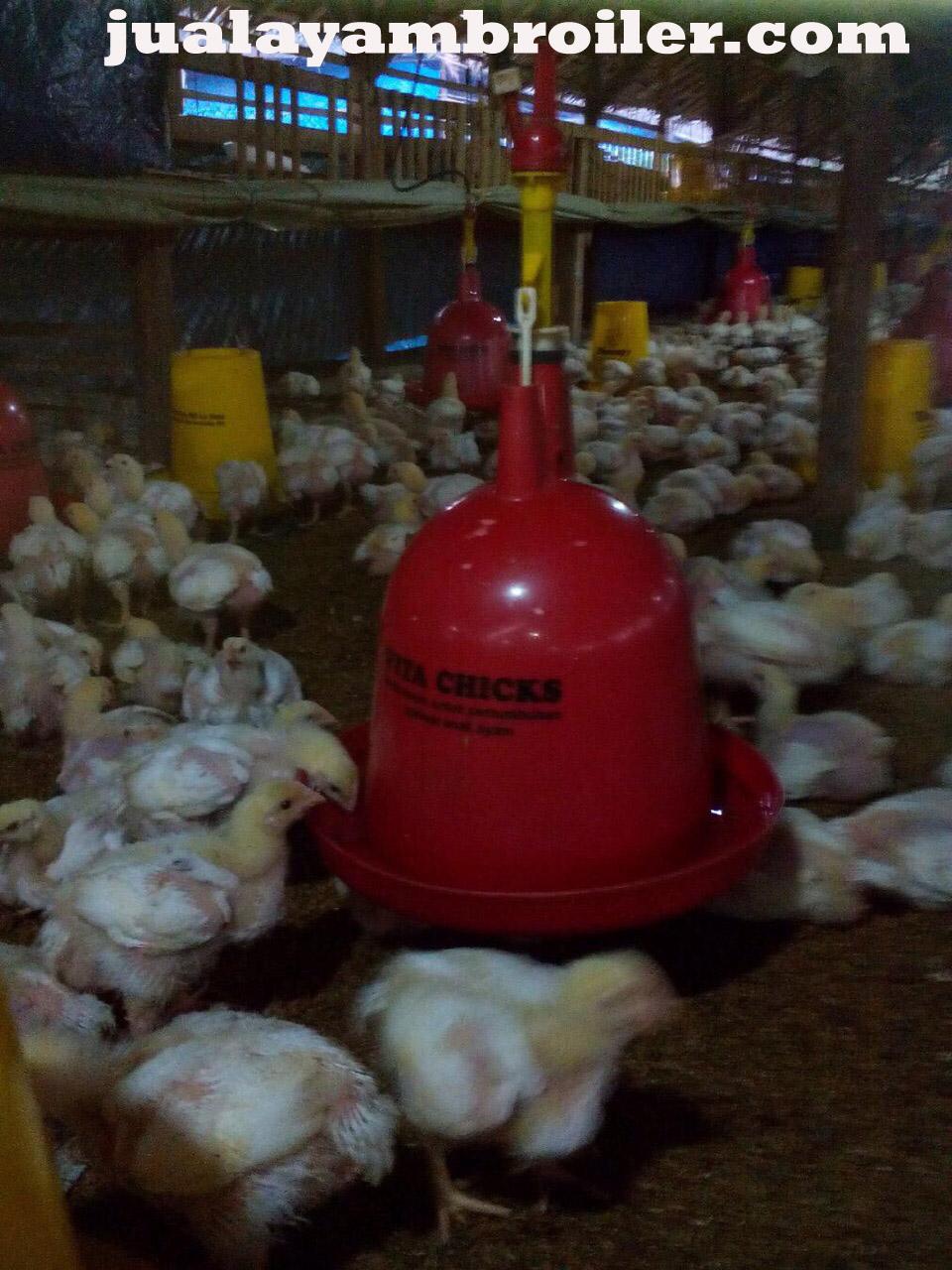 Jual Ayam Broiler Jatiwarna Bekasi