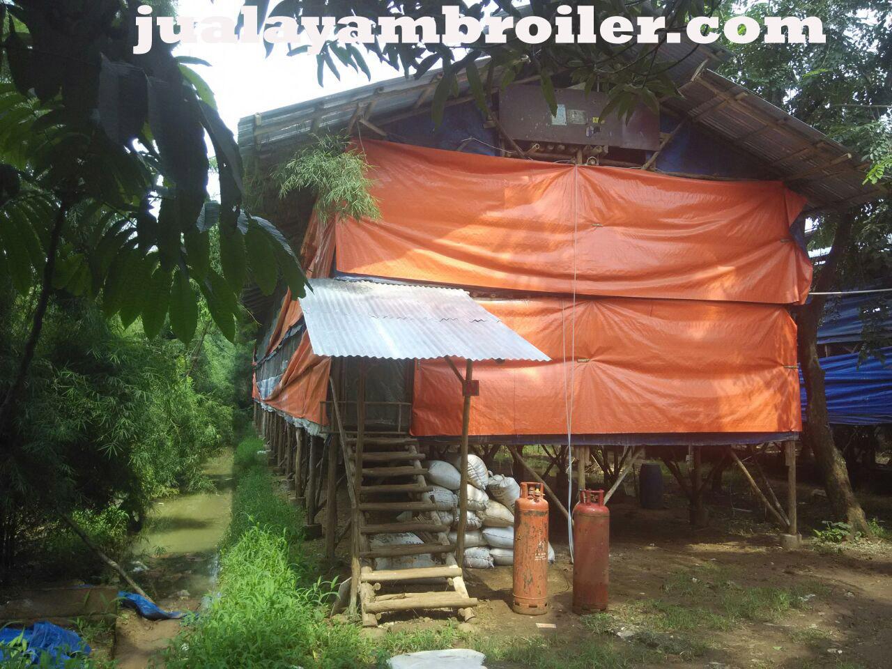 Jual Ayam Broiler di Buaran Jakarta Timur