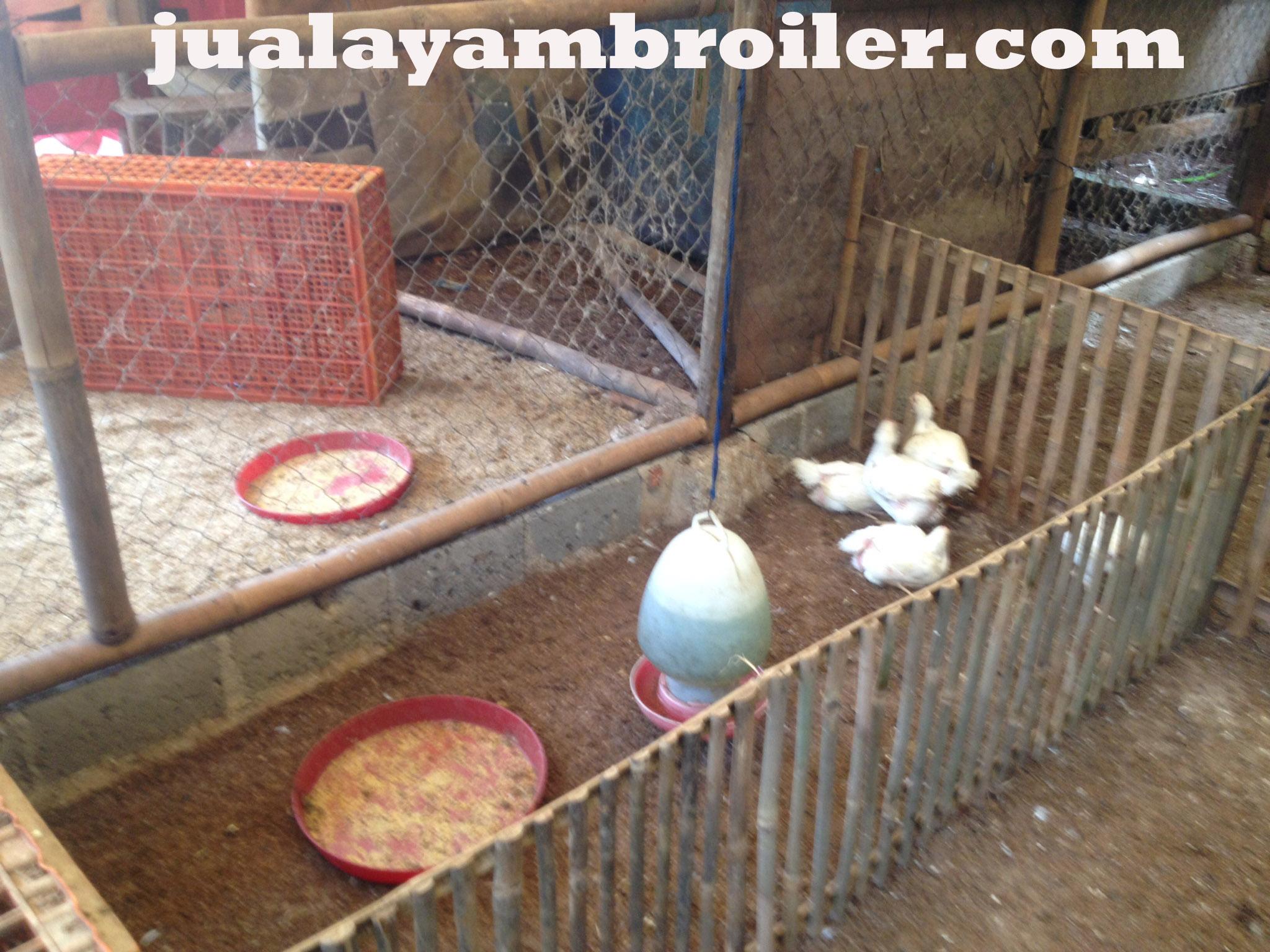 Jual Ayam Broiler di Penggilingan Jakarta Timur