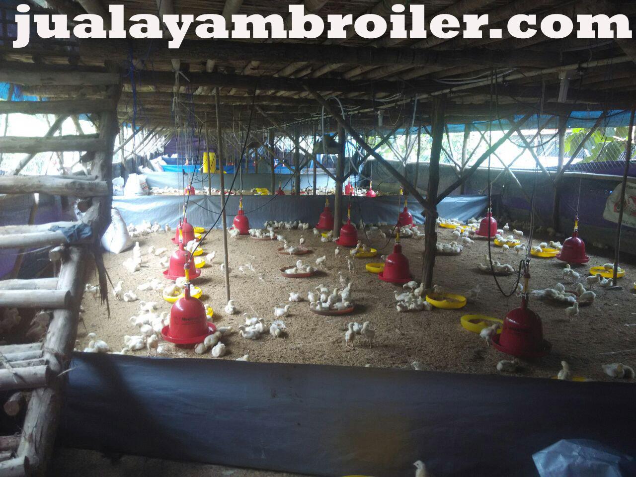 Jual Ayam Broiler di Pondok Kopi Jakarta Timur