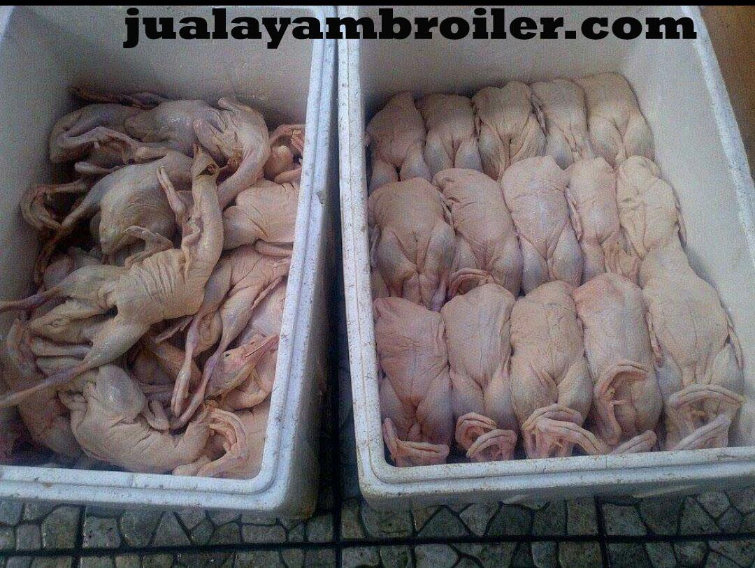 Jual Ayam Karkas di Bogor