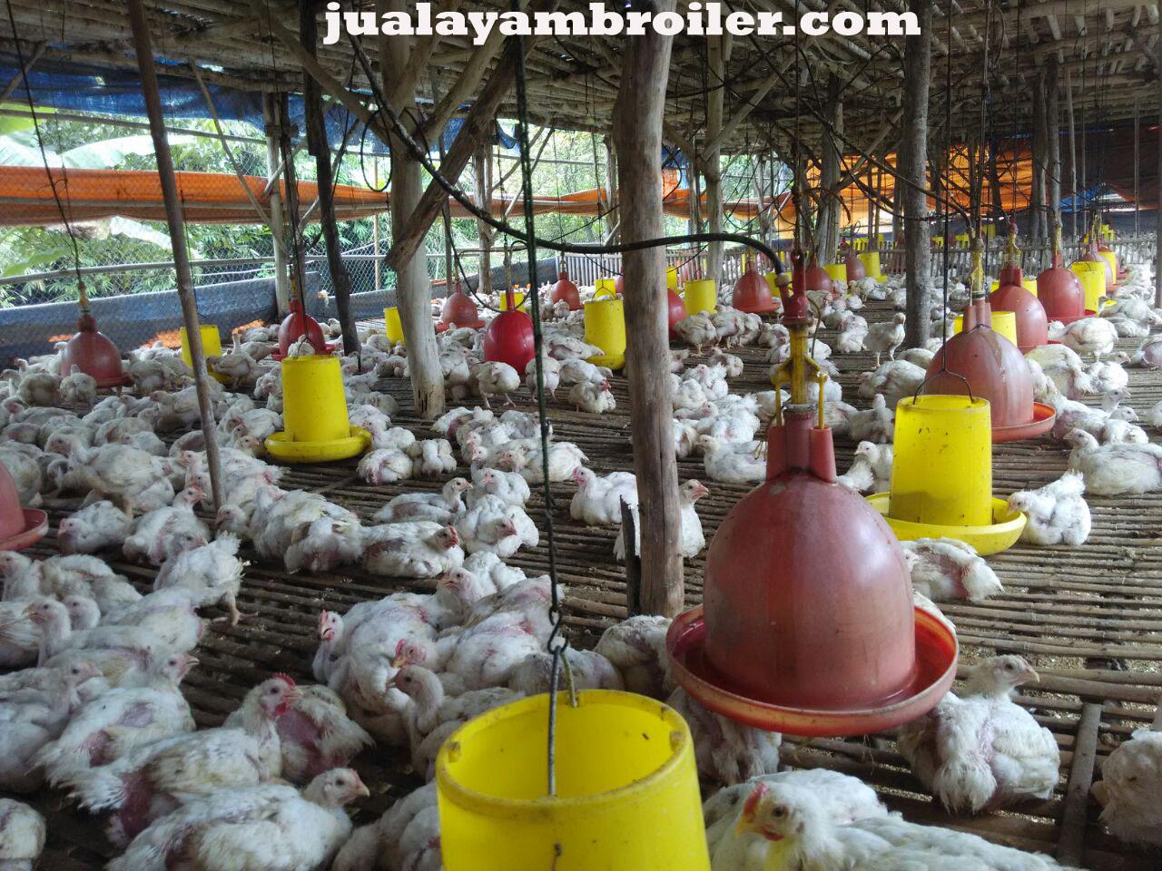 Jual Ayam Karkas di Cipinang Muara Jakarta Timur
