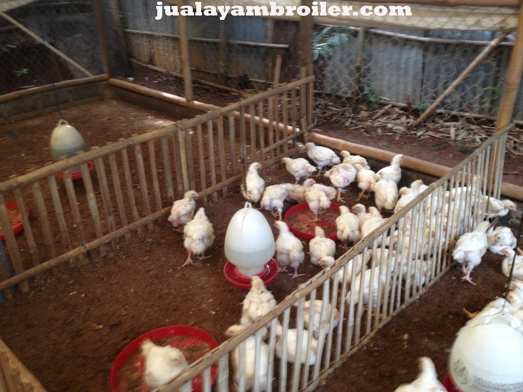 Jual Ayam Karkas di Cipinang Indah Jakarta Timur