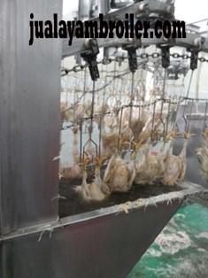 Jual Ayam Karkas Margonda Depok