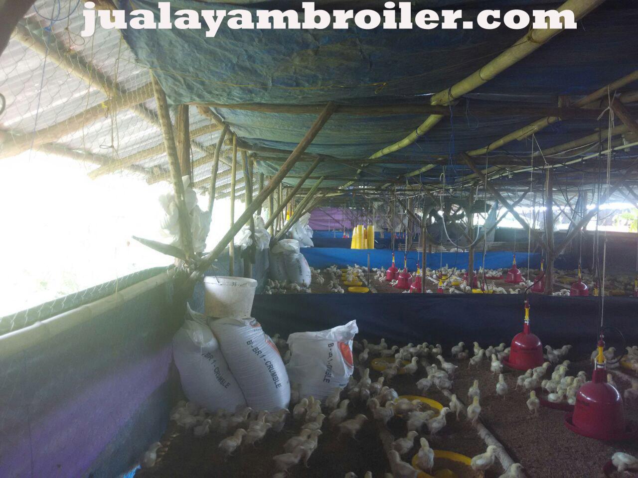 Jual Ayam Karkas Utan Kayu Jakarta Timur