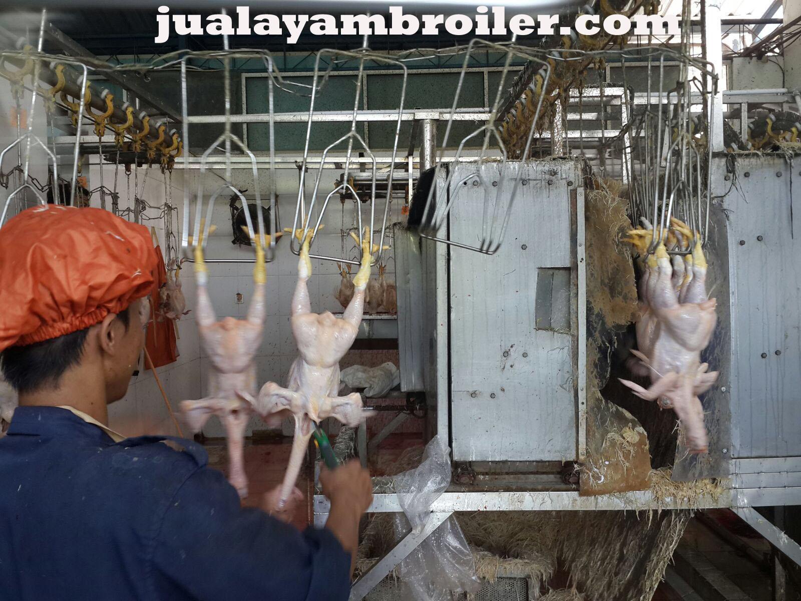 Jual Ayam Karkas Kranji Bekasi
