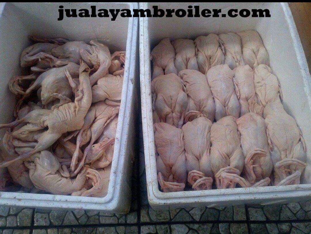 Jual Ayam Karkas di Kebon Kacang Jakarta Pusat