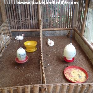 Jual Ayam Karkas di Bumi Satria Kencana Bekasi